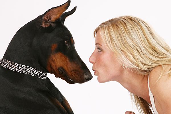 Tierfoto junge, auf dem Bauch liegende Frau, die ihren Dobermann auf die Schnauze küsst vor hellem Hintergrund.
